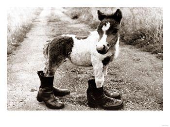 Bebe cheval - Cheval rigolo ...